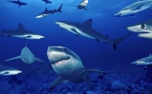 Bolsa Tiburones