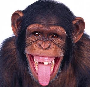 Hagamos el experimento del mono, los dardos y el Wall Street Journal