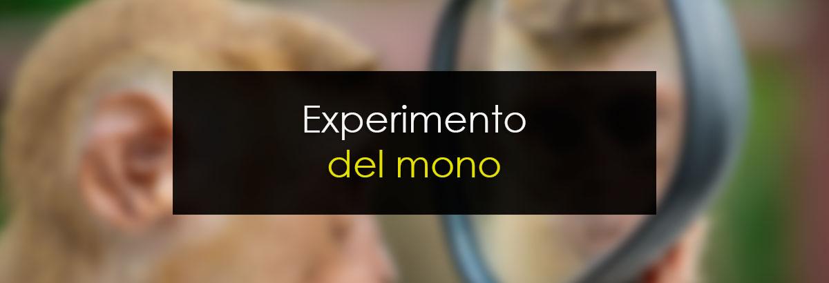 Experimento del Mono