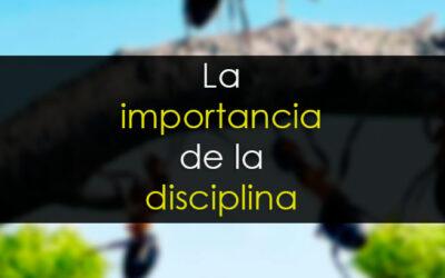 La importancia de la disciplina